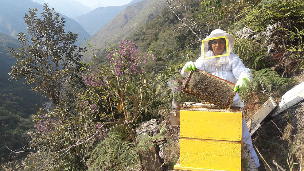 Susana, dueña del apiario, con 30 años de experiencia ha decidido ampliar su negocio haciendo envíos a todo el Perú