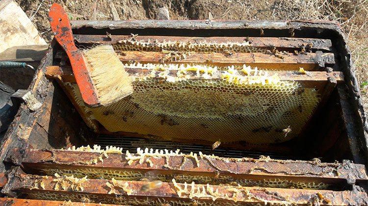 Beneficios de la miel en panal