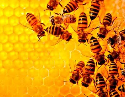Comprar miel de abejas