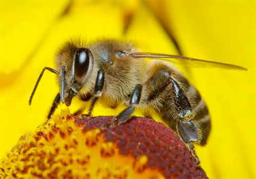 donde comprar miel pura