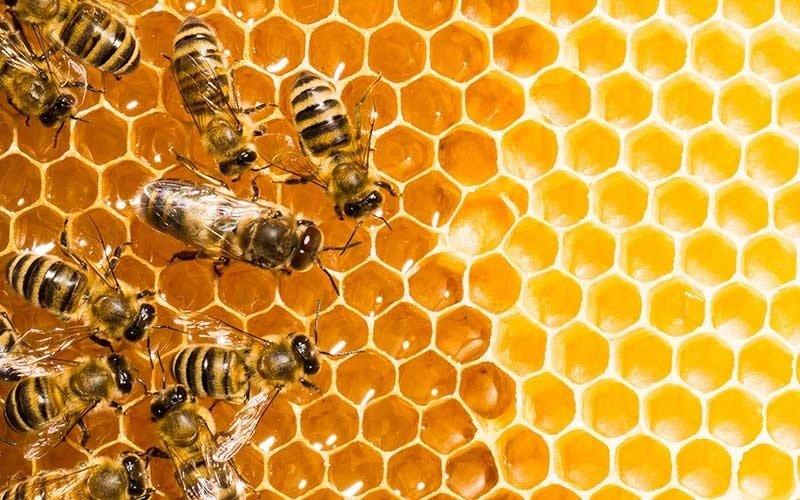 miel de abeja en el peru