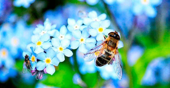 Miel para la resaca