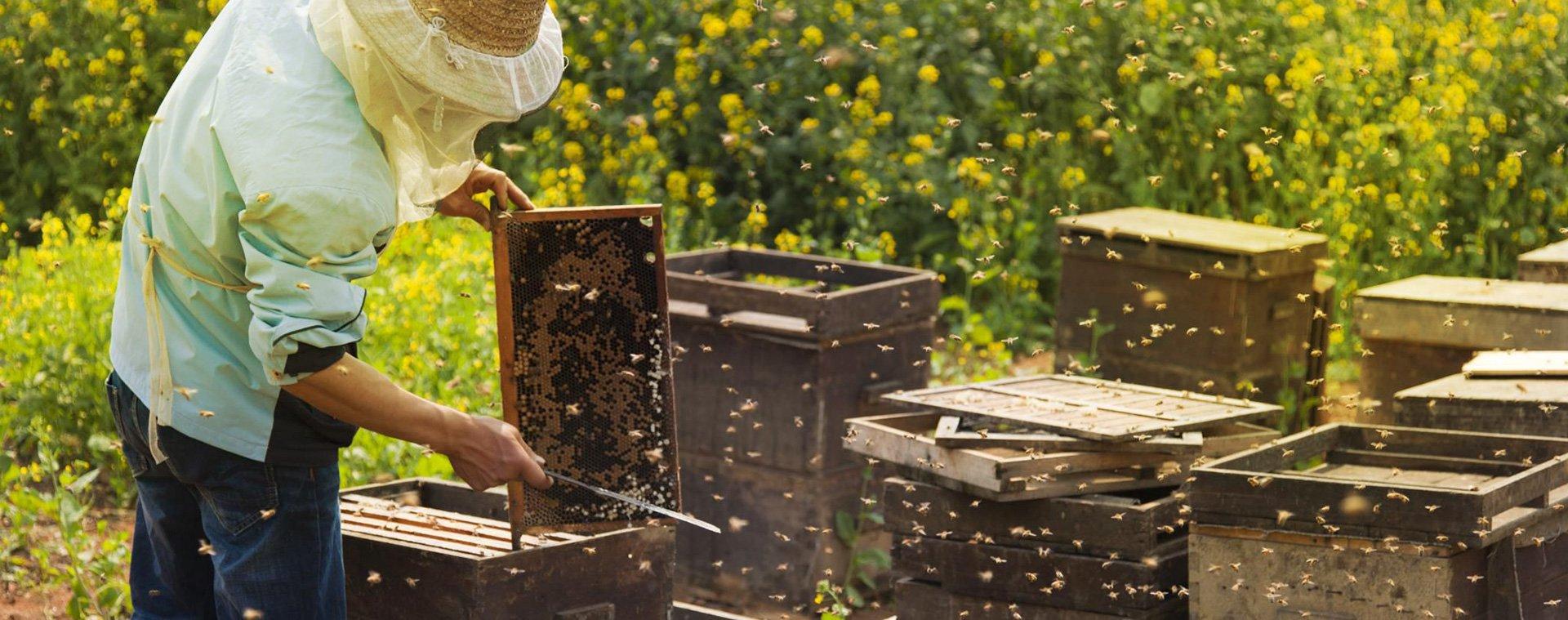 miel en la piel