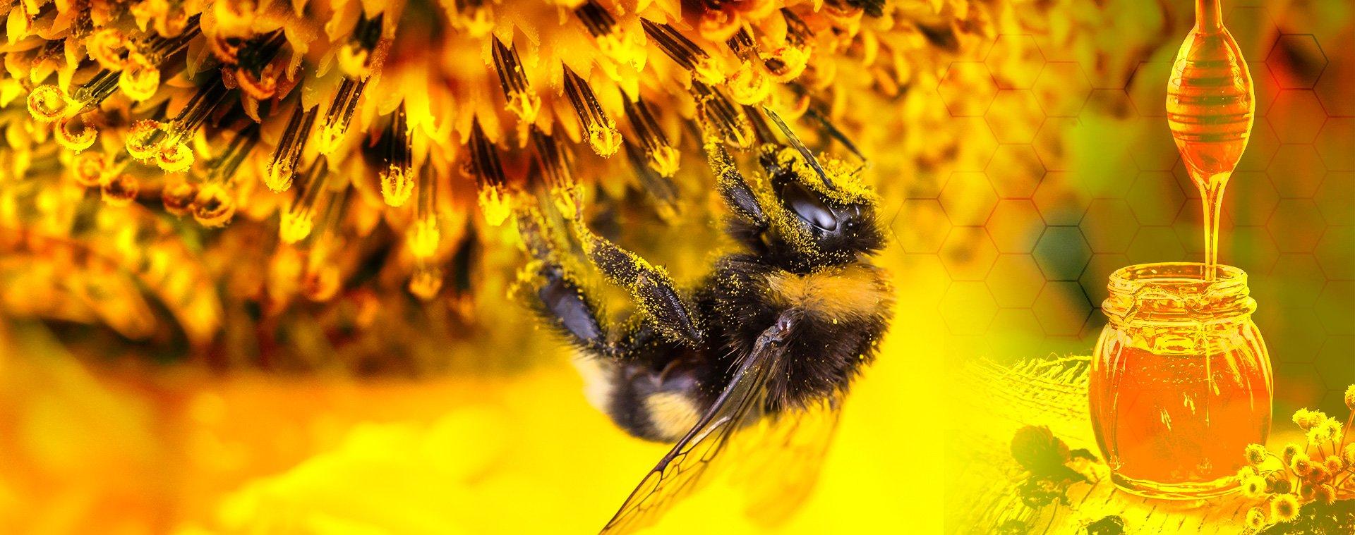 miel natural de abeja