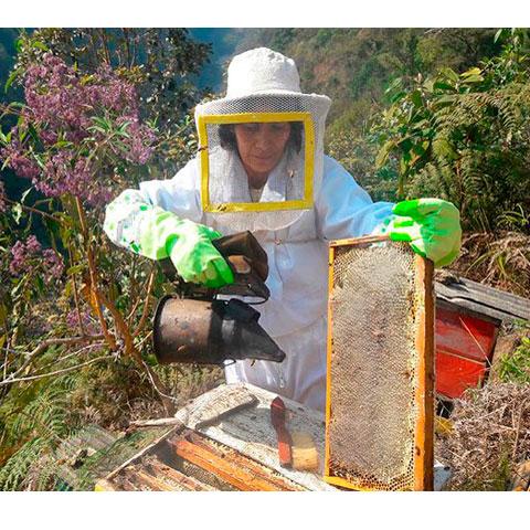 Visita a las abejas en Perú